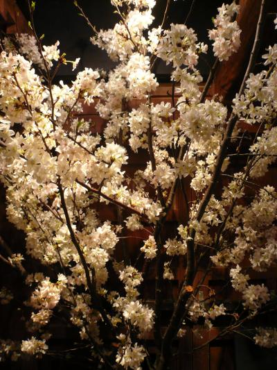 桜(染井吉野)2