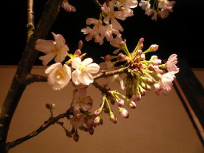 桜(大山桜)2
