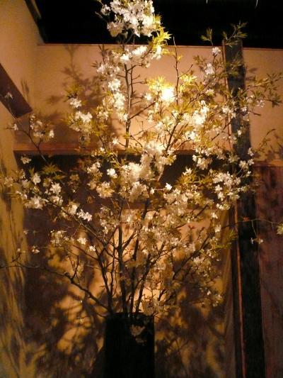 桜(山桜)1