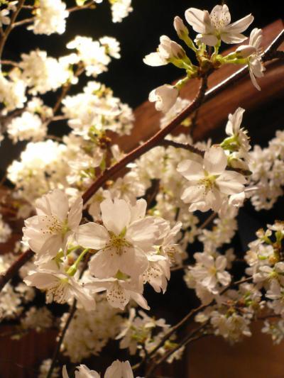 桜(吉野)2