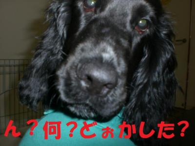 縺ェ縺ォ・歙convert_20091105225812