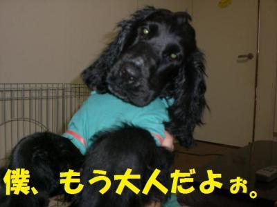 螟ァ莠コ_convert_20091105225737
