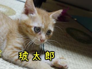 kotarou.jpg