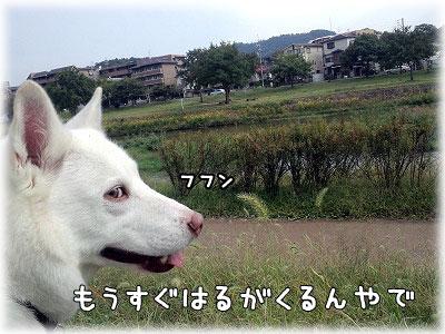 CA3I0027-1.jpg