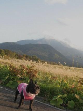 koyo3_20111011114752.jpg