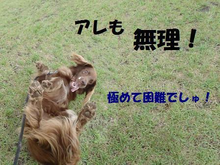 AAコピー ~ コピー ~ 21JULY11 062limit
