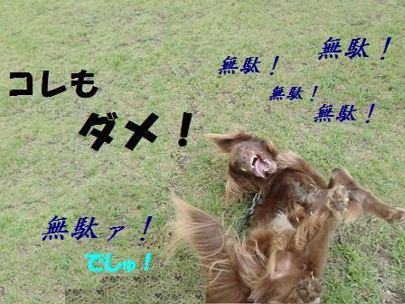 BBコピー ~ コピー ~ 21JULY11 063limit