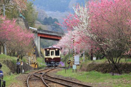わたらせ渓谷鉄道の春