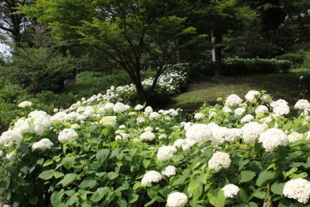 東那須野公園