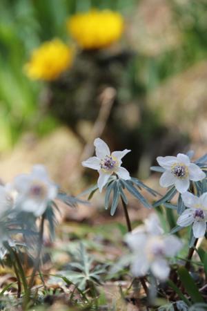四季の森星野の春