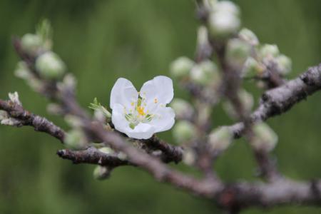 古河総合公園の春
