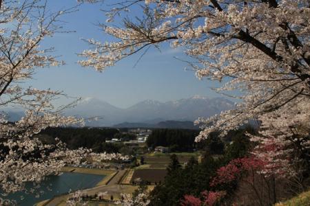 大室ダムの桜