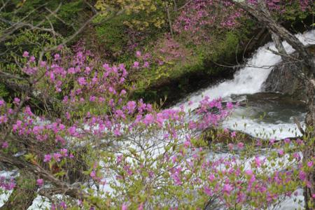 竜頭の滝とツツジ