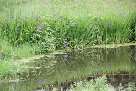 鳥野目河川公園
