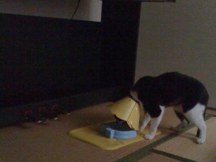 ごはん食べ 2