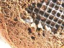 110103ナメクジの卵