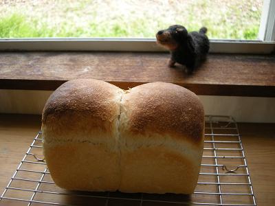 2009.8.31はちみつ食パン(酵母) 016