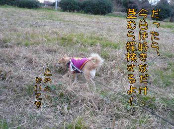 komusan_0109_002
