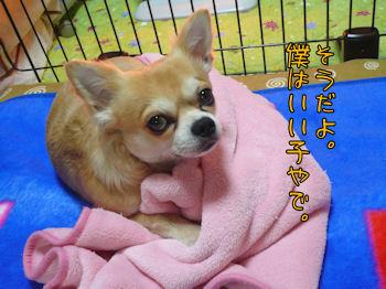 komusan_0109_005