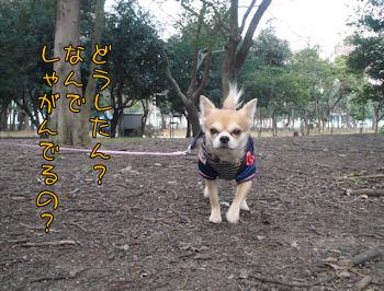 komusan_0113_003