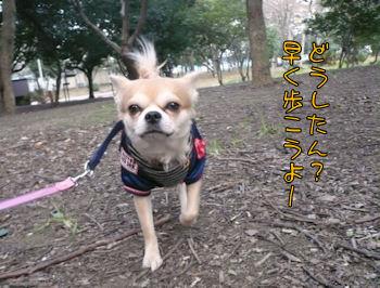 komusan_0113_004