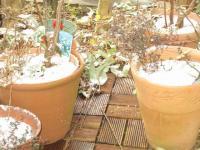 2011初雪…お庭の様子