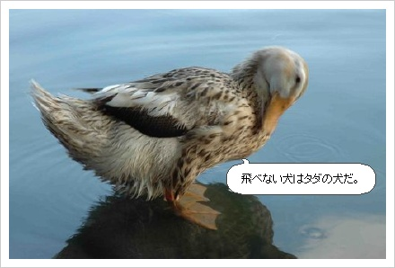 image1782072.jpg