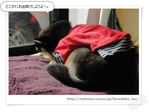 image2126774.jpg