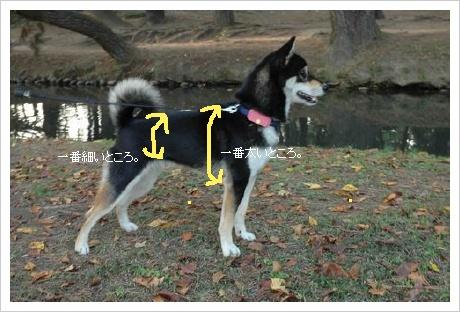 image3099631.jpg