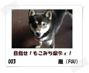 image5180414.jpg