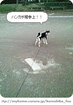 image6658635.jpg