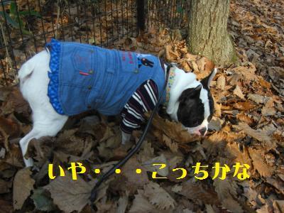 12_20091115010938.jpg