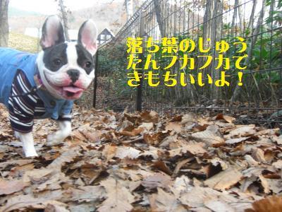 14_20091115011010.jpg