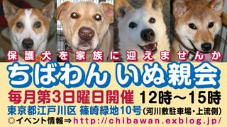 chibawan_teiki_inuoyakai320x1802
