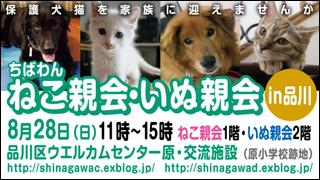 nekoinuoyakai20110828_320x180.jpg