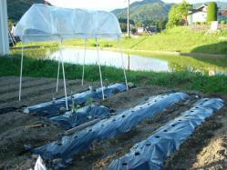 2010・5・29 畑~♪ トマト