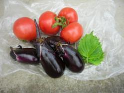 20100731トマト・なす・青じそ収穫~♪