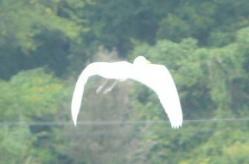 20100913あっぱれたんぼ鳥2