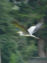 20100913あっぱれたんぼ鳥