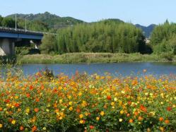 20101007花公園(コスモス)~♪10