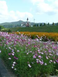 20101007花公園(コスモス)~♪2