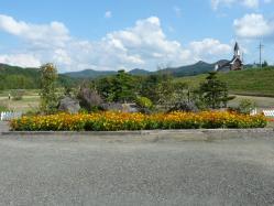 20101007花公園(コスモス)~♪5