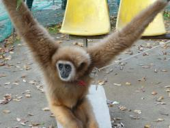 20101112福知山動物園3