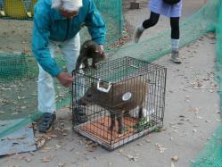 20101112福知山動物園9