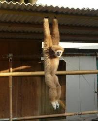 20101112福知山動物園2