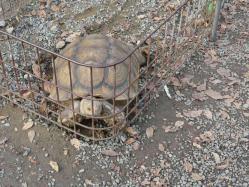 20101112福知山動物園6