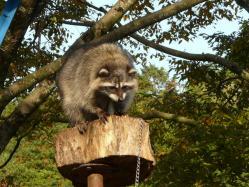 20101112福知山動物園4
