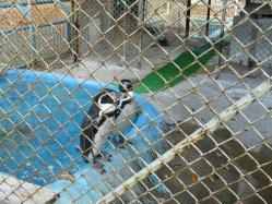 20101112福知山動物園8