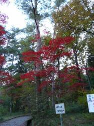 20101112福知山動物園紅葉3