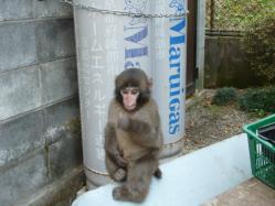 20101112福知山動物園13